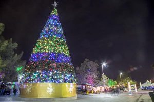 The Magic Forest at Opportunity Village holiday event with large tree it in blue and green