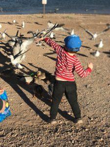 Small boy feeding seagulls on the beach at Lake Mead