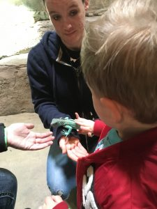 Small boy with SeaQuest worker holding lizard on her hand, the boy is petting it.