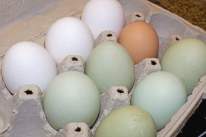 Farm fresh eggs in a carton