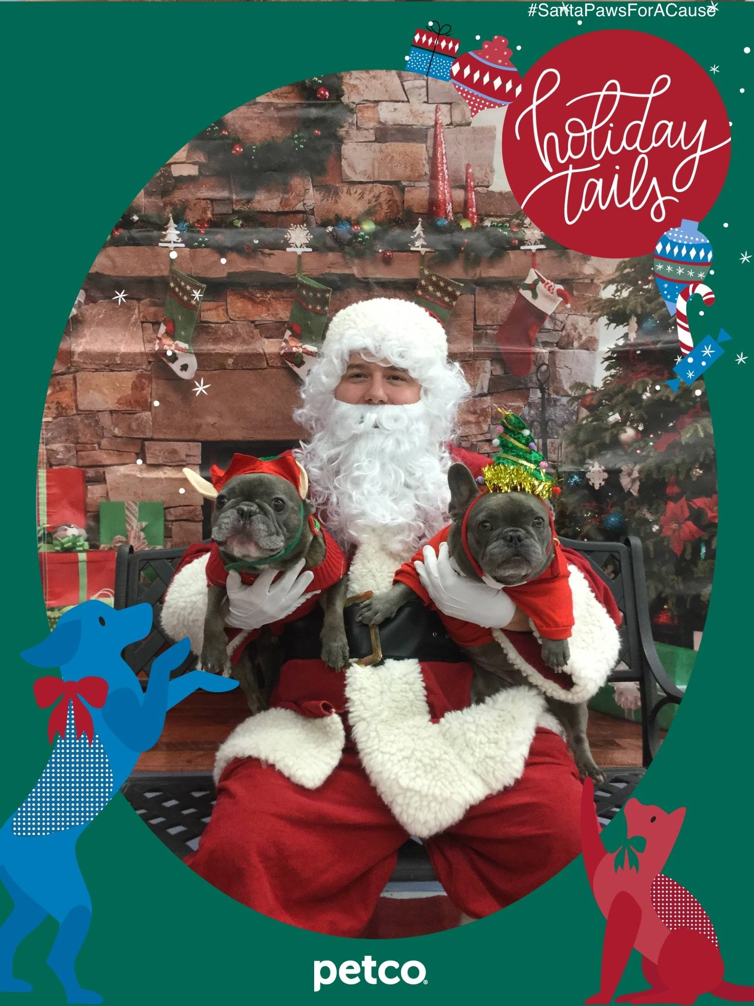 Two dogs in elf costumes for a picture with Santa