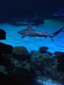 A shark swimming through dark, blue lit waters
