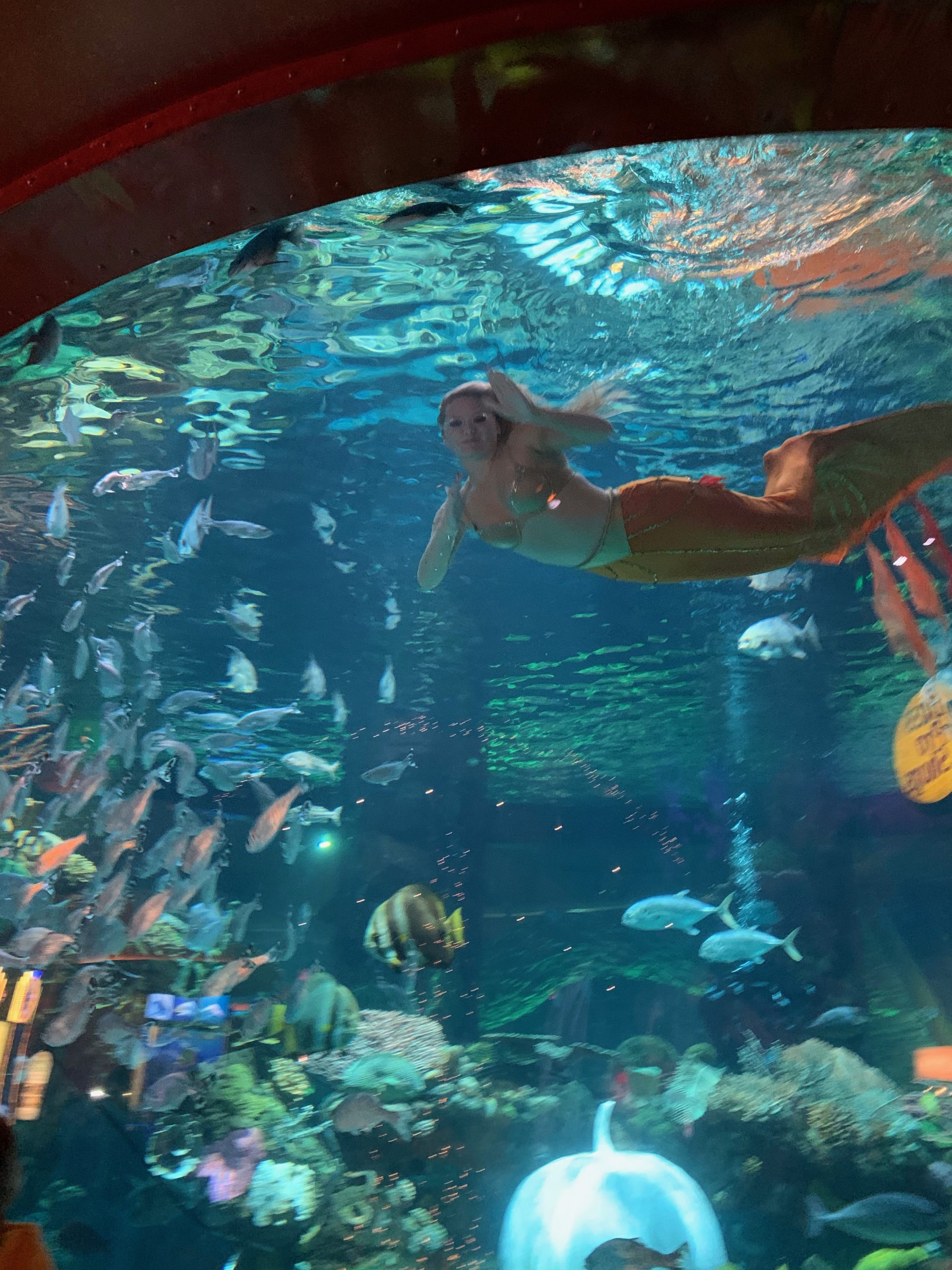 Live Mermaid show at Bass Pro Shops