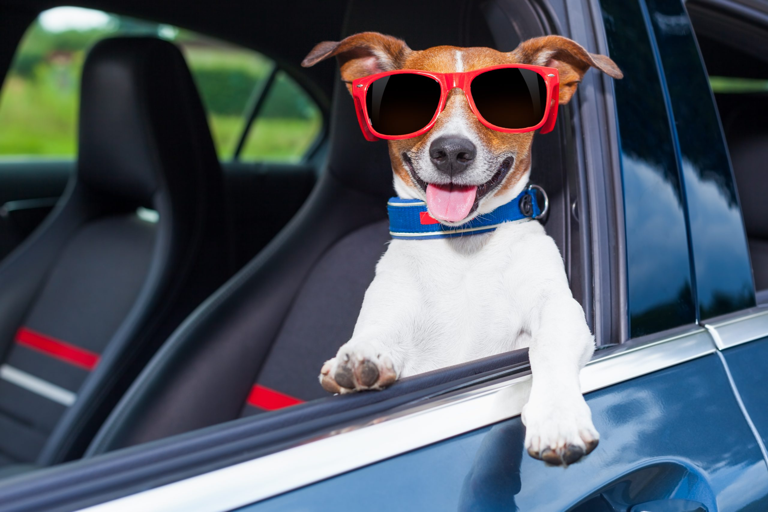 dog in car wearing sunglasses to Bark in the park